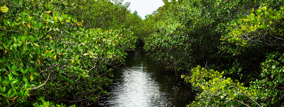 Deering Estate Mangroves