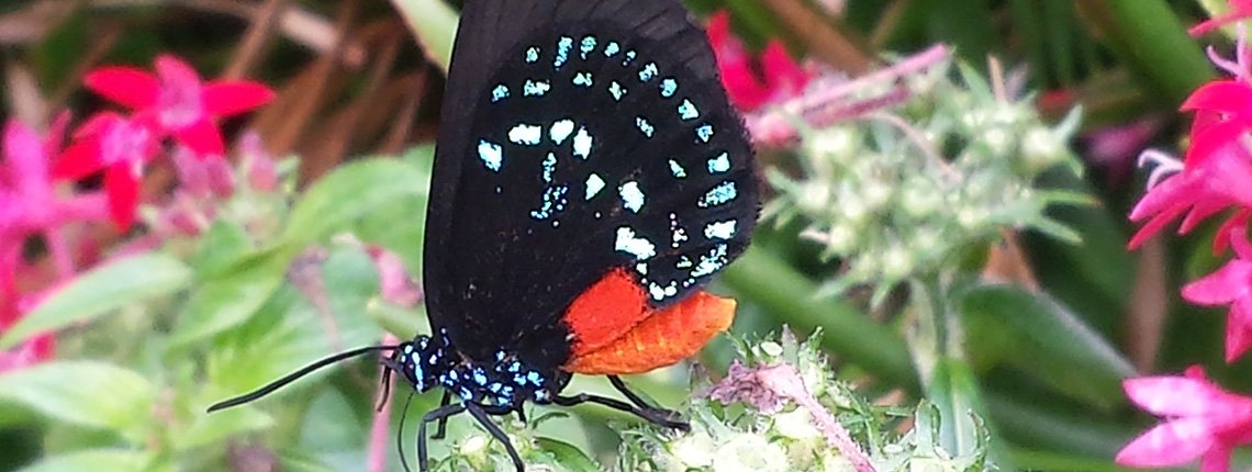 Deering Estate Butterfly