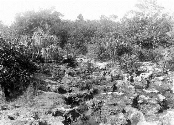 Small photographed the unique geology and ecological landscapes of the Deering Estate in the 1910s
