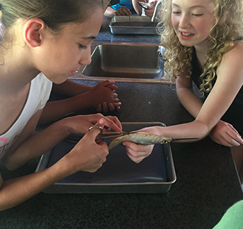 students conducting a fish dissestion