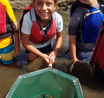 students conducting a catch and release of marine life