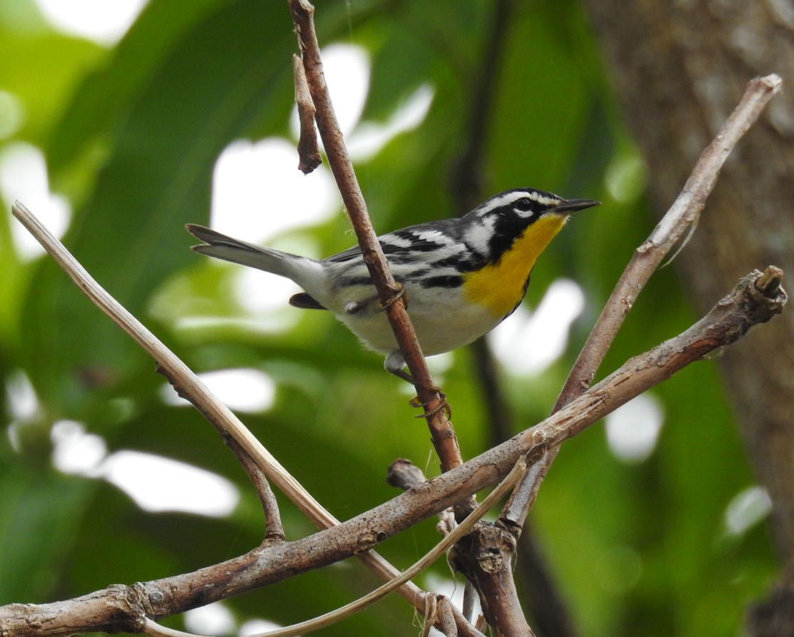 Discover Birding at The Deering Estate