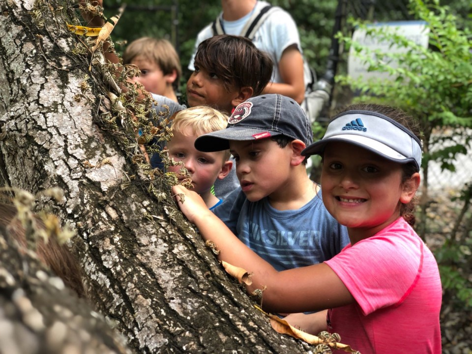 students checking out bugs crawling on a tree in the park