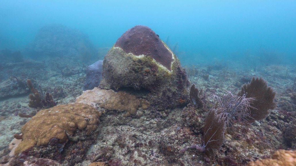 speaking sustainably corals in crisis