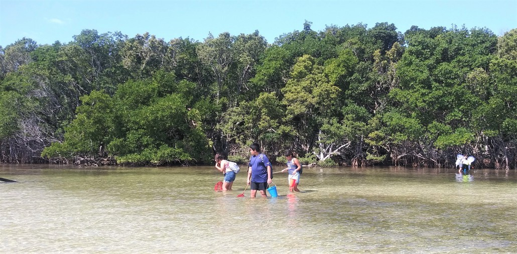 Deering Estate Marine Conservation Catching Critters Learning