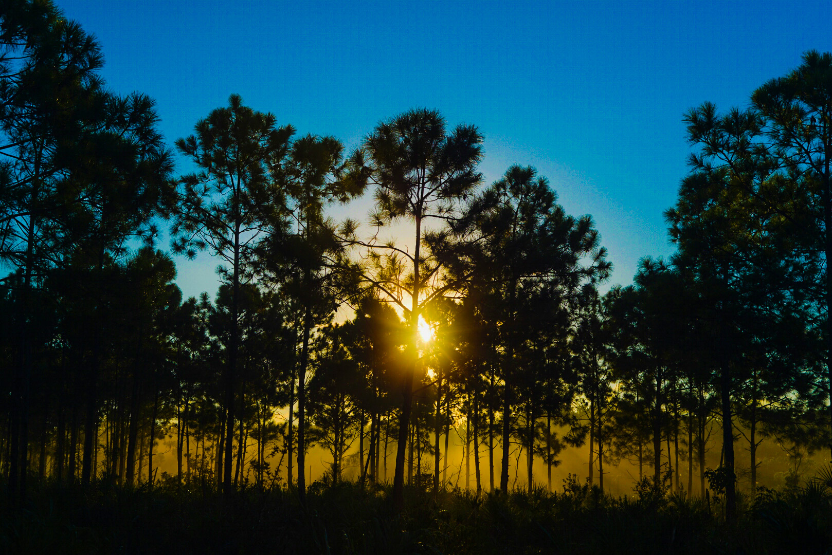 Landscape photo of the sunset over the endangered pine rockland, taken during a private group hike.