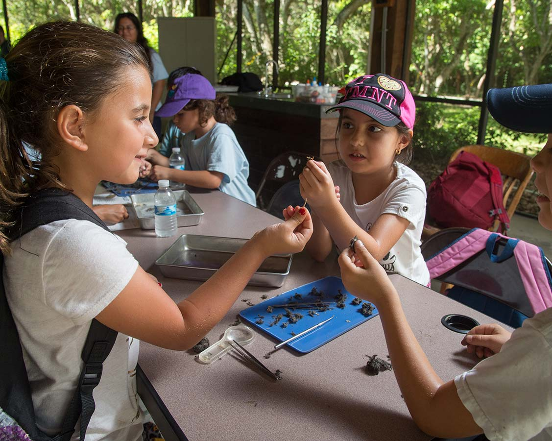 deering estate camp kids classroom activity