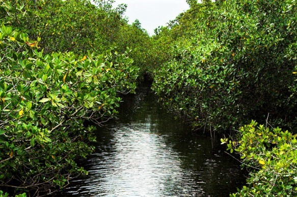 A coastal mangrove forest on the estate meets the waters of biscayne bay
