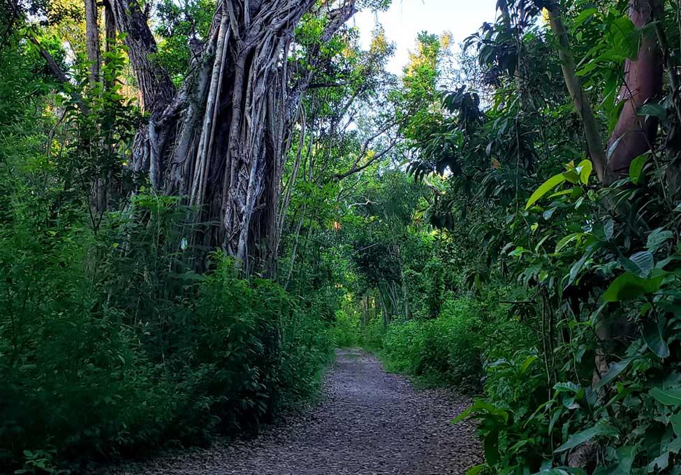 walking trails at the deering estate