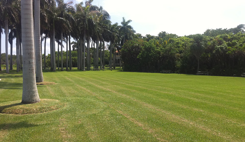 royal palm grove meadow wedding space miami