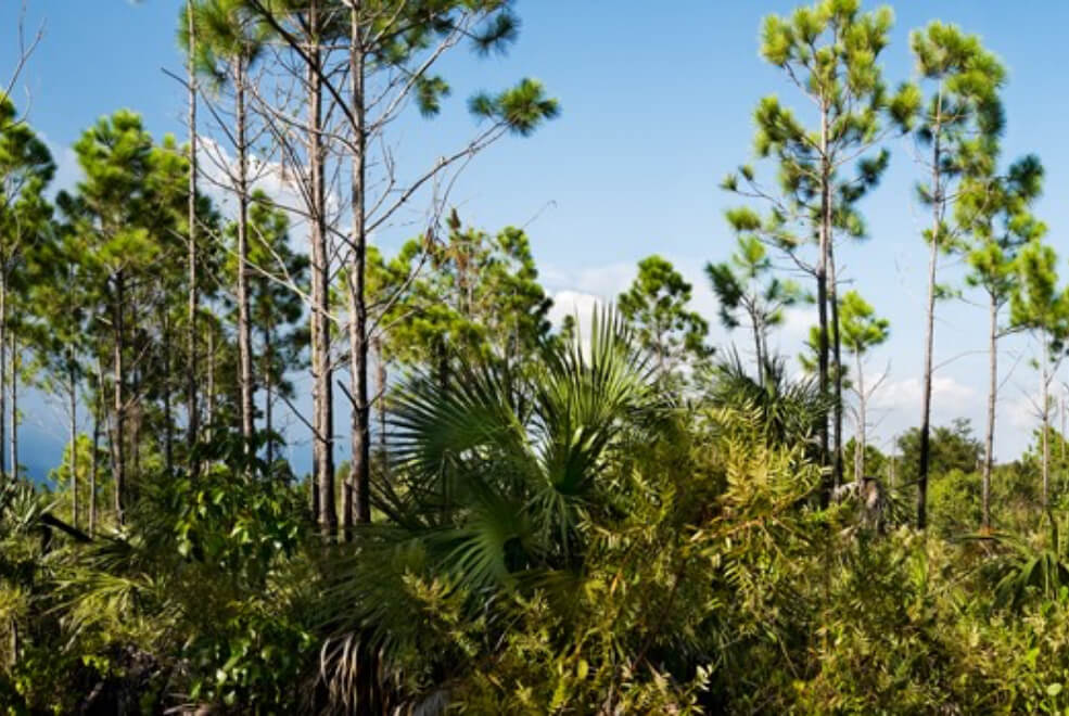 Everglades in Florida that field trips at The Deering Estate explore.