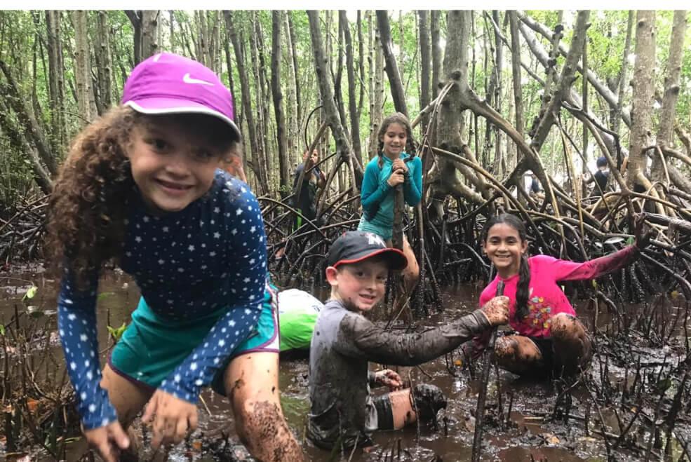 Kids hiking through mangrove in Florida to learn about nature on field trip.
