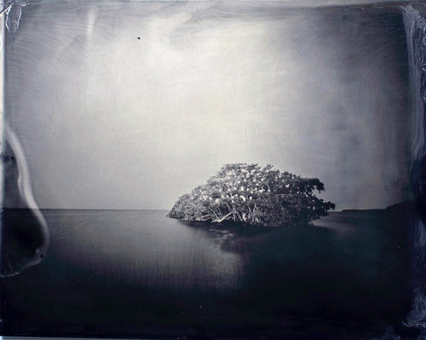 Miquel Salom's wet plate collodion photography of the mangroves by Deering Estate
