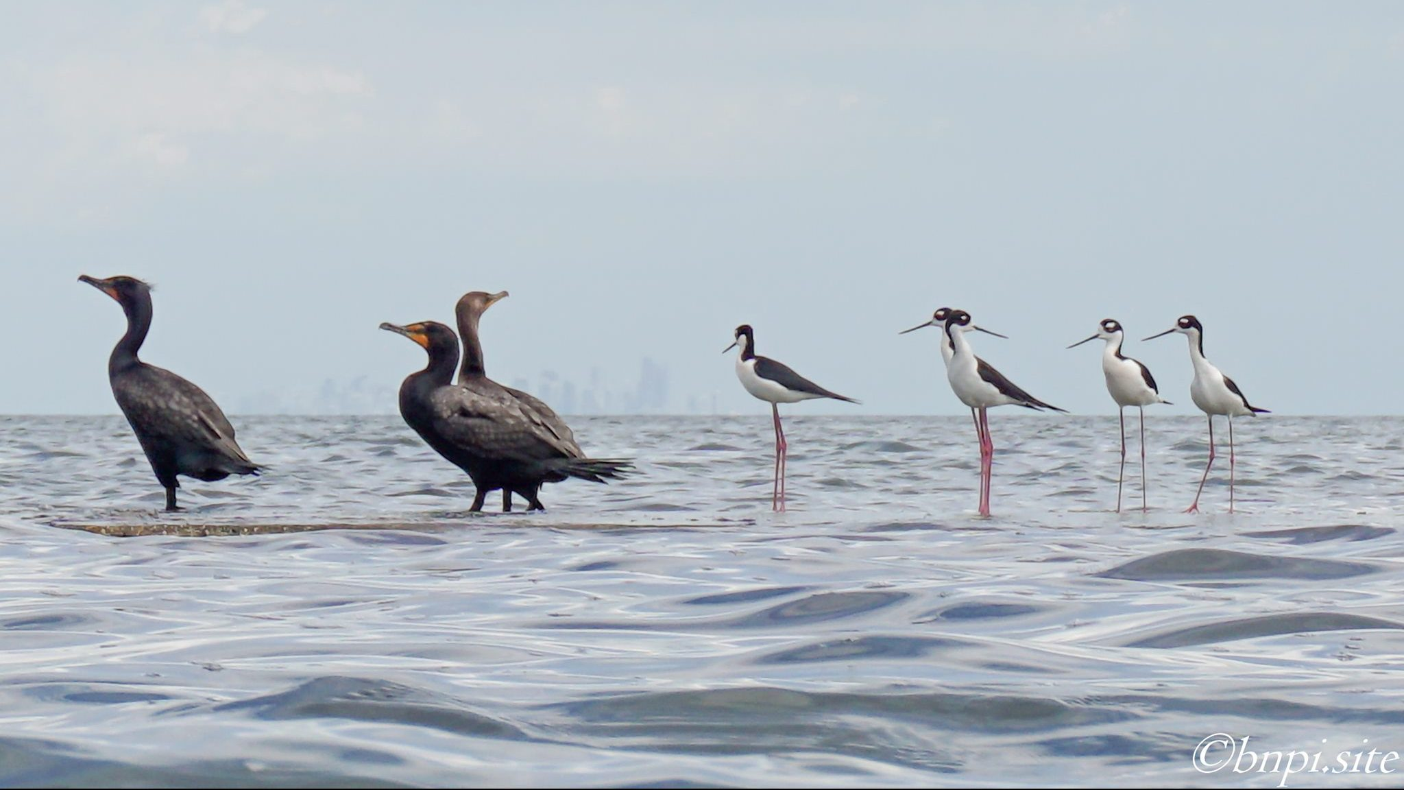 group of sea birds perched on a rock during Deering Estate's Birds of Biscayne boat tour