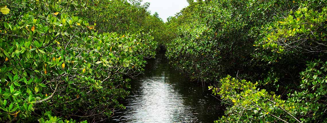 green lush miami nature